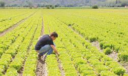 Insediamento giovani agricoltori € 40mila contributo a fondo perduto
