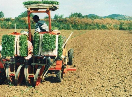 Contributi per Ammodernamento Aziende Agricole
